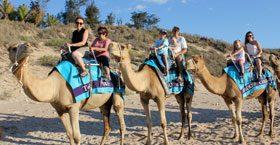 MORNING CAMEL TOUR (45 Minutes)
